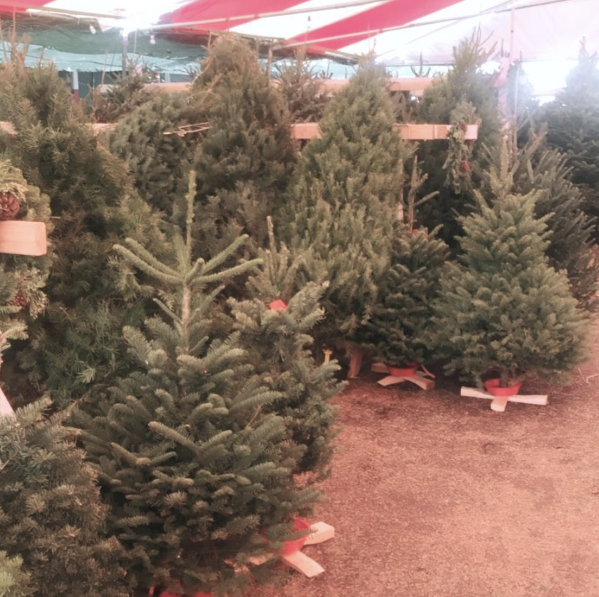 mr jingles christmas trees on 170 and franklin ave 20171215 becca tobin instagram map